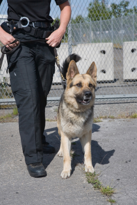 how to get a job training police dogs
